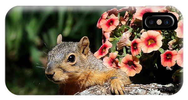 Peek-a-boo Squirrel IPhone Case