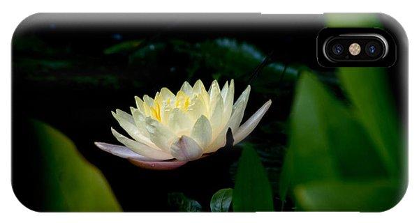 Peekaboo Lemon Water Lily IPhone Case