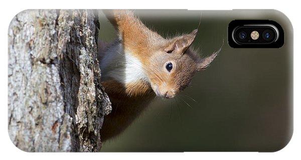 Peekaboo - Red Squirrel #29 IPhone Case