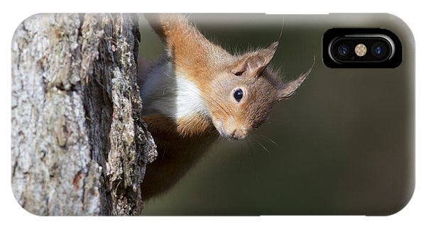 Peekaboo - Red Squirrel #29 IPhone Case