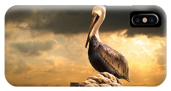 Pelican iPhone Case - Pelican After A Storm by Mal Bray
