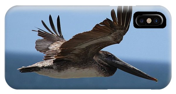 Pelican Flying Wings Up  IPhone Case