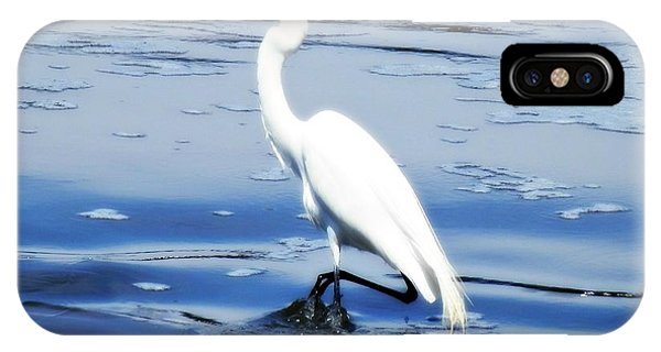Pelican In It's Glory IPhone Case