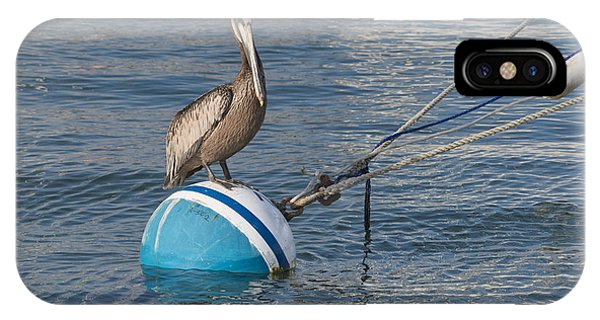 Pelican On A Buoy IPhone Case