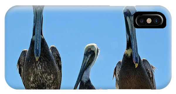 Pelicans At The Kure Beach Fishing Pier 2006 IPhone Case