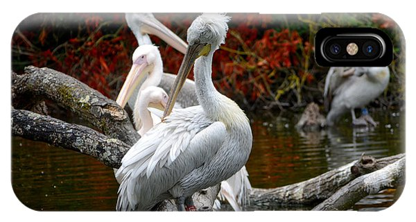 Pelicans IPhone Case