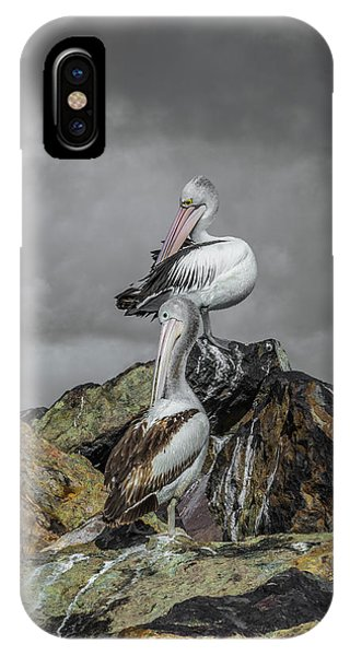 Pelicans On Rocks IPhone Case