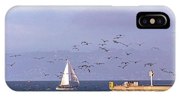 Pelicans Pelicans IPhone Case