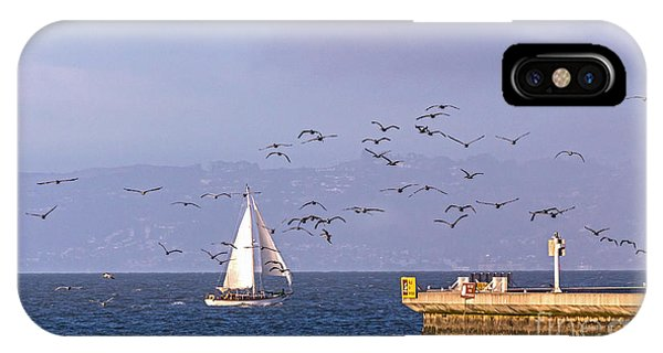 IPhone Case featuring the photograph Pelicans Pelicans by Kate Brown