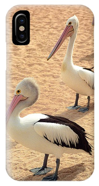 IPhone Case featuring the photograph Pelicans Seriously Chillin' by T Brian Jones