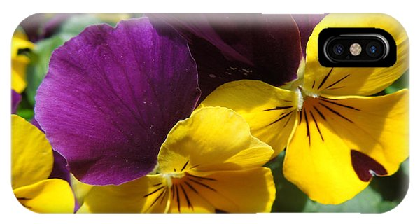 Pella Pansies IPhone Case