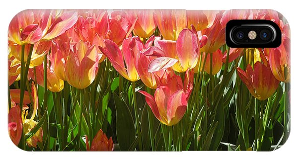 Pella Tulips Yellow Pink IPhone Case