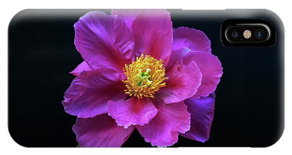 Peony - Beautiful Flowers And Decorative Foliage On The Right Is One Of The First Places Among The G IPhone Case