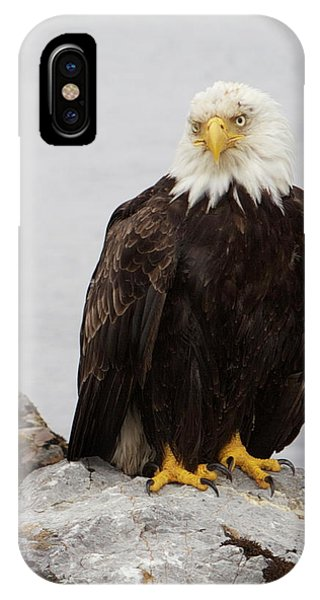 IPhone Case featuring the photograph Perched Bald Eagle by Brandy Little