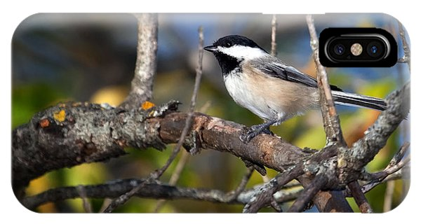 Perched Black-capped Chickadee IPhone Case