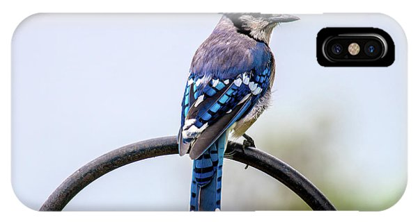 IPhone Case featuring the photograph Perched Blue Jay by Onyonet  Photo Studios