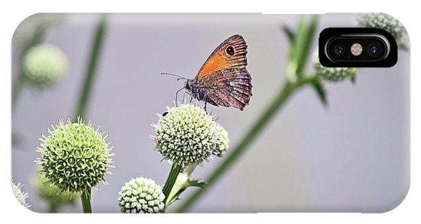 Perched Butterfly No. 255-1 IPhone Case