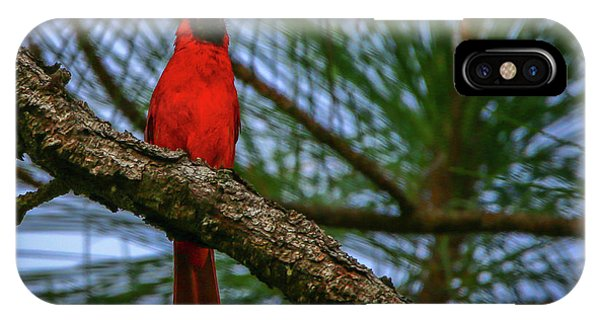 Perched Cardinal IPhone Case