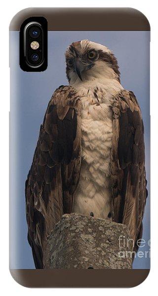 Perched Hawk IPhone Case