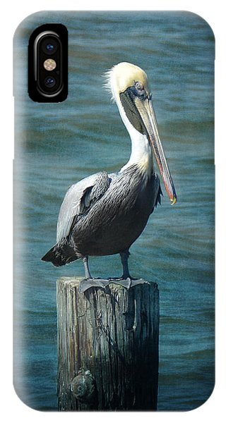 Perched Pelican IPhone Case