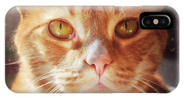 Percy In The Sun IPhone Case