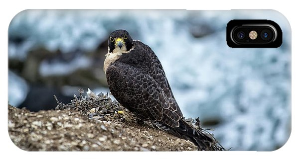 Peregrine Falcon - Here's Looking At You IPhone Case