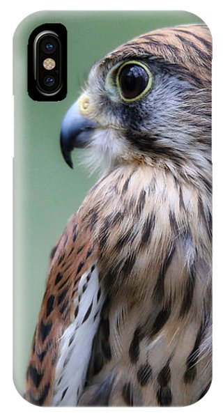 European Kestrel IPhone Case