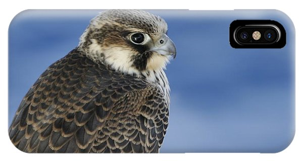 IPhone Case featuring the photograph Peregrine Falcon Juvenile Close Up by Bradford Martin