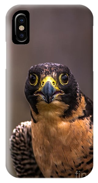 Peregrine Falcon Profile 2 IPhone Case