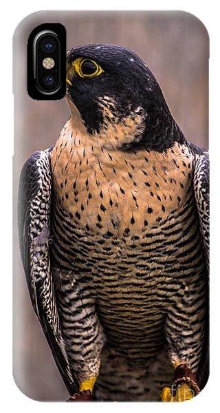 Peregrine Falcon Profile IPhone Case