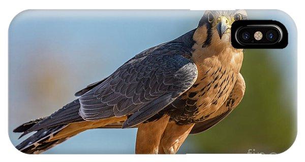 Peregrine Falcon Wildlife Art By Kaylyn Franks IPhone Case
