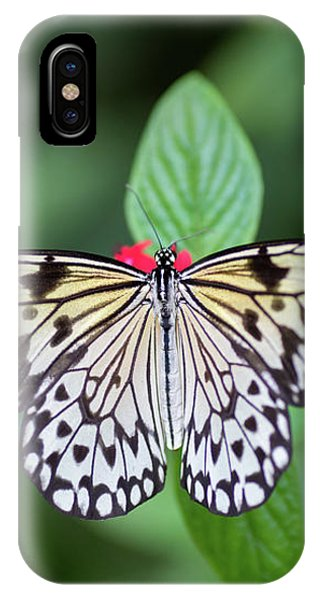 IPhone Case featuring the photograph Perfect Butterfly Pose by Raphael Lopez