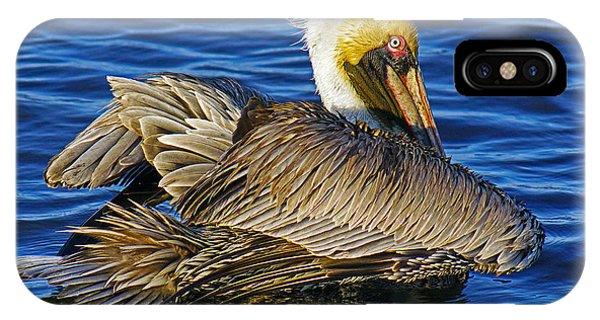Perky Pelican IPhone Case