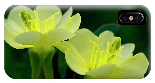 Perky Primroses IPhone Case