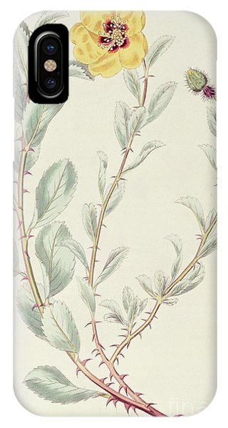 Flora iPhone Case - Persian Rose by M Hart