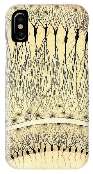 Nerves iPhone Case - Pes Hipocampi Major Santiago Ramon Y Cajal by Science Source