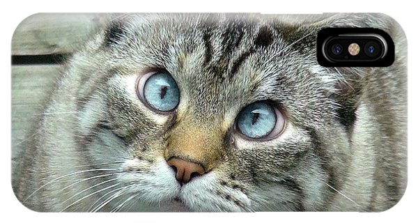 Pet Portrait - Lily The Cat Four IPhone Case