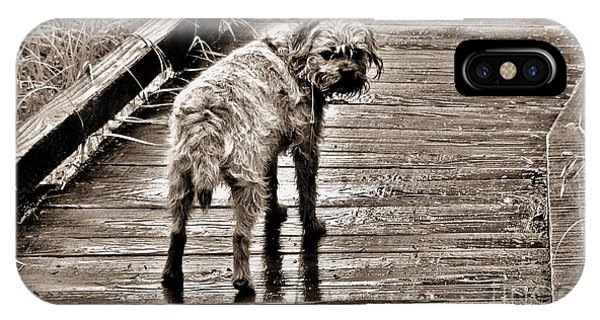 Pet Portrait - Puck IPhone Case