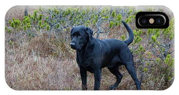 Pet Portrait - Radar IPhone Case
