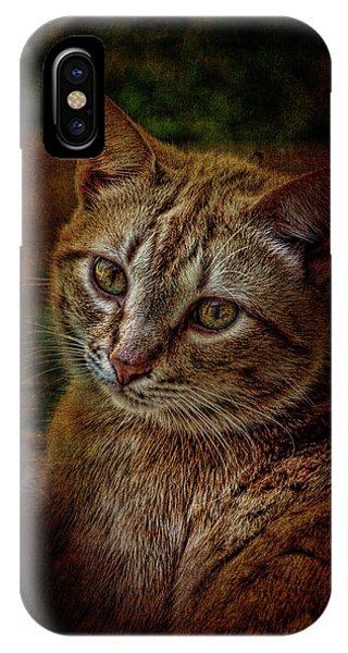 Pets Fat Cat Portrait 2 IPhone Case