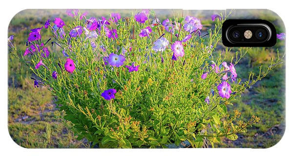 IPhone Case featuring the photograph Petunias Golden Hour by John Brink