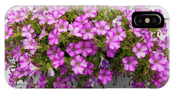 IPhone Case featuring the photograph Petunias On White Wall by Elena Elisseeva