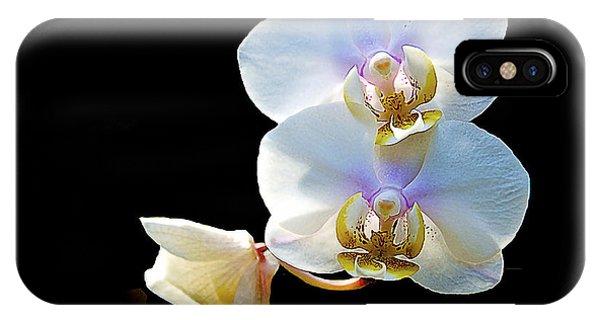 Phalaenopsis Culican #1 Nobby's Amy Shin Hua IPhone Case