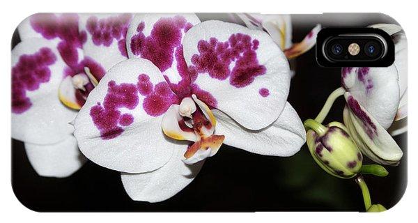 Phalaenopsis Hybrid Orchid IPhone Case