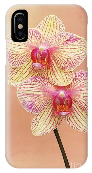 Phalaenopsis Moth Orchids #2 V2 IPhone Case