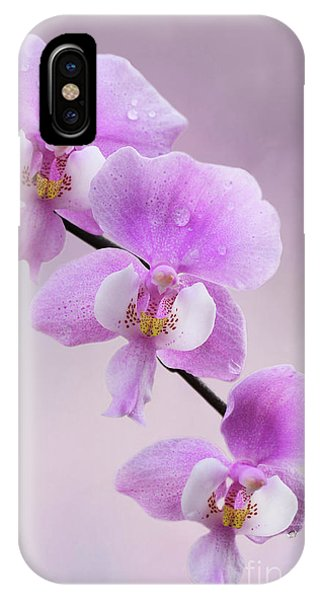 Phalaenopsis Schilleriana Fragrant Butterfly Orchid V2 IPhone Case