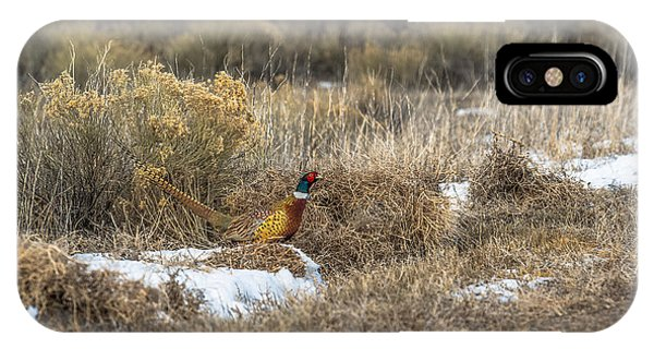 Pheasant Glory IPhone Case