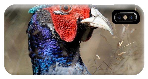 Pheasant Portrait IPhone Case