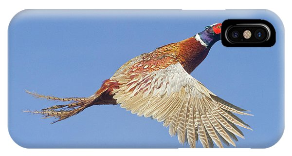 Pheasant Wings IPhone Case