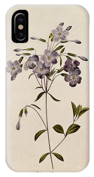 Botanical iPhone Case - Phlox Reptans by Pierre Joseph Redoute